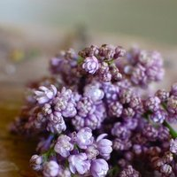 DIY: How to Work with Lilacs