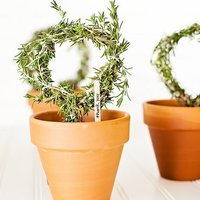 DIY: Rosemary Topiaries