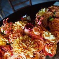 yellow, orange, Flowers
