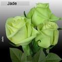 JadeGirl