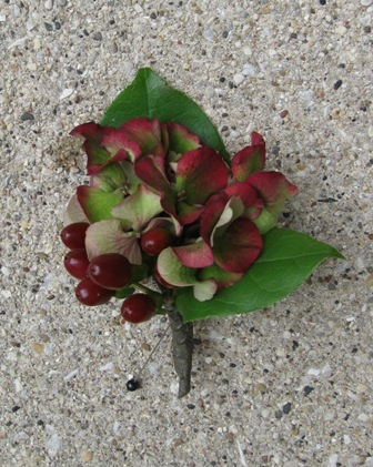 Flowers & Decor, orange, red, green, Boutonnieres, Flowers, Boutonniere, Hydrangea, Berries, Pollen