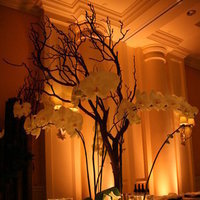 Reception, Flowers & Decor, white, Centerpieces, Candles, Flowers, Centerpiece, Uplighting