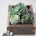 1375582385 thumb 1368044285 content diy simple succulents 1