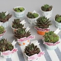 1375582403 thumb 1370460977 content painted potted favors 13