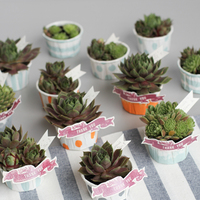 Painted & Planted: Succulent Favors