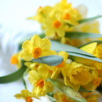 DIY: Wild Daffodil Bouquet