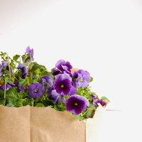 DIY: Newspaper Wrapped Plants