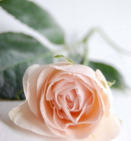 DIY A Garden Rose Bouquet
