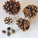 1375582687 thumb 1367503670 content diy simple pine cone accents 1