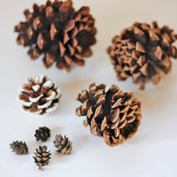 DIY: Simple Pine Cone Accents
