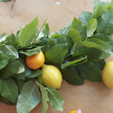 1375582832 thumb 1369927991 content diy making a lemon leaf garland 9