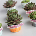1375583041_thumb_1370461549_content_painted-potted-favors-8