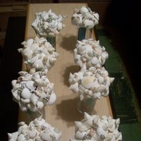 DIY Wedding Challenge 2010: Sea Shell Bouquet