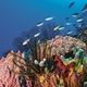 1375600150_small_thumb_1373745881_saintlucia_scuba5__800x530_