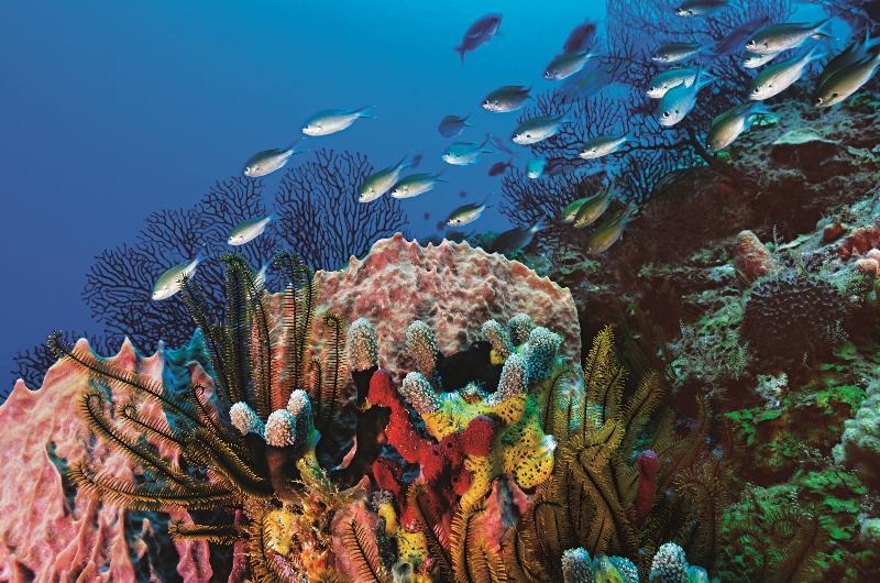 Destinations, Honeymoons, Caribbean, Beach, Adventure, Relaxing, St lucia