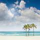 1375600250 small thumb 1369318145 tropical sunny beach in miami