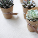 1375606414 thumb 1371149557 1368044390 content diy simple succulents 5