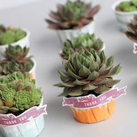 Favors & Gifts, Wedding Style, green, Beach Wedding Favors & Gifts, Eco-Friendly Wedding Favors & Gifts, Garden Wedding Favors & Gifts, Modern Wedding Favors & Gifts, Rustic Wedding Favors & Gifts, Vintage Wedding Favors & Gifts, Welcome gifts, Beach Weddings, Classic Weddings, Modern Weddings, Guest gifts, Classic Wedding Favors & Gifts