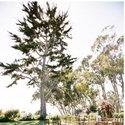 1375611829_thumb_1370296883_real-wedding_ashley-and-todd-ca-6.jpg