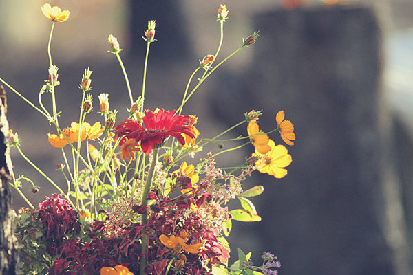 Flowers & Decor, Real Weddings, Wedding Style, yellow, red, green, gold, Centerpieces, Fall Weddings, Rustic Real Weddings, Southern Real Weddings, Fall Real Weddings, Shabby Chic Real Weddings, Rustic Weddings, Shabby Chic Weddings, Fall Wedding Flowers & Decor, Rustic Wedding Flowers & Decor
