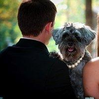 Real Weddings, Wedding Style, Modern Real Weddings, Summer Weddings, West Coast Real Weddings, Summer Real Weddings, Modern Weddings, Pets