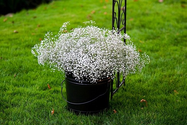 Flowers & Decor, Real Weddings, Wedding Style, Aisle Decor, Modern Real Weddings, Summer Weddings, West Coast Real Weddings, Summer Real Weddings, Modern Weddings, Summer Wedding Flowers & Decor, Babys breath
