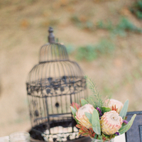 Flowers & Decor, Birdcage, Proteas