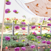 Flowers & Decor, Real Weddings, Wedding Style, purple, Ceremony Flowers, Modern Real Weddings, Summer Weddings, West Coast Real Weddings, Summer Real Weddings, Modern Weddings, Colorful, Chuppah, Vibrant, Indian wedding, Jewish wedding, West Coast Weddings, Multicultural Real Weddings, Multicultural Weddings, Indian Real Wedding, Jewish Real Wedding
