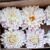 Flowers & Decor, Real Weddings, pink, Dahlias
