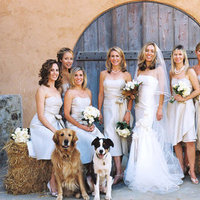 Real Weddings, Wedding Style, West Coast Real Weddings, Classic Real Weddings, Vineyard Real Weddings, Classic Weddings, Vineyard Weddings, Beige, Pets