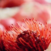 Flowers & Decor, Real Weddings, orange, Destination, Glamorous, Formal, Dramatic, pincushion protea