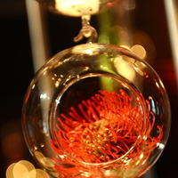 Flowers & Decor, Real Weddings, Destination, Glamorous, Formal, Dramatic, pincushion protea