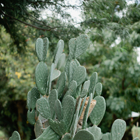 Real Weddings, Desert, Cactus, rustic romance