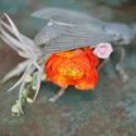1376080336 thumb a b creative styling delbarr moradi photog crimson horticulture rarities flowers 1