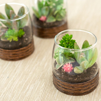DIY: Wood Base Terrariums
