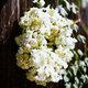 1376402164_small_thumb_lisa-lefkowitz-kathleen-deery-florals-1