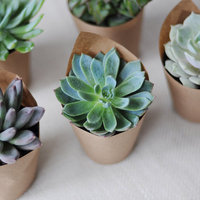 DIY: Simple Succulents