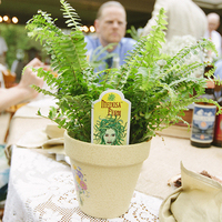 Fern Favors