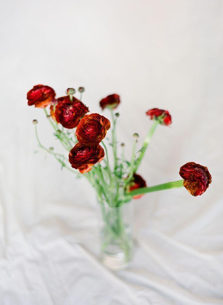 Ranunculuses