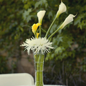 1379511811 thumb photo preview bright yellow california backyard wedding 2