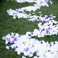Scattered Flower Petals