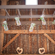 1381861214 small thumb shabby chic barn wedding 29