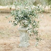 Olive Branch Urn