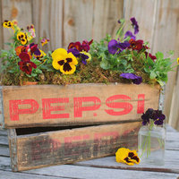 DIY: Pansy Centerpiece