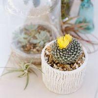 Eco-Friendly Plants