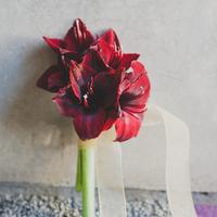 Red Amaryllis Winter Bouquet