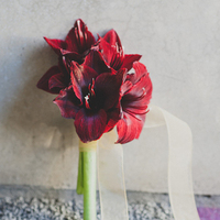 Red Amaryllis Winter Bouquet