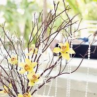 Orchids in Branches