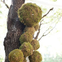 Creative Moss Decor