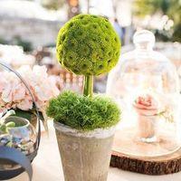 Moss and Mum Topiary